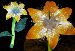 Solarnightflowers2_1